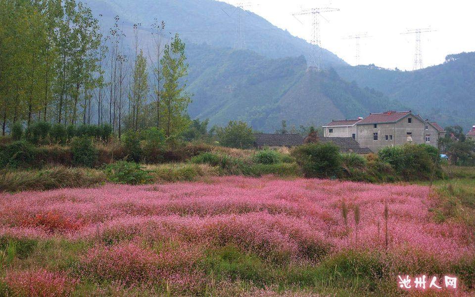 池州烏石村絕美風景