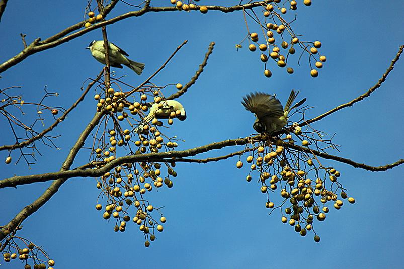 [风光] 树上小鸟啼