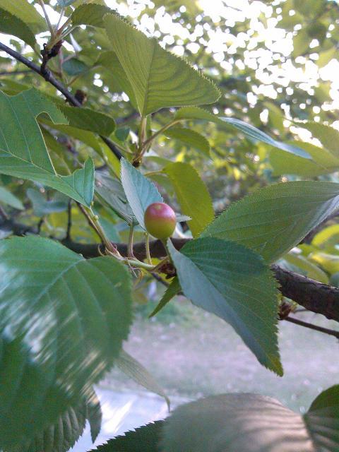 长在树上的蛇莓