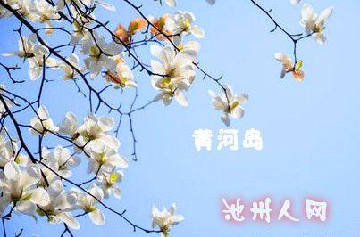 燕子展开一副春天的图画