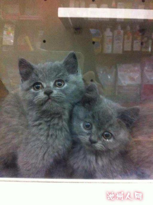 亿宠宠物的小猫咪宝宝到店啦