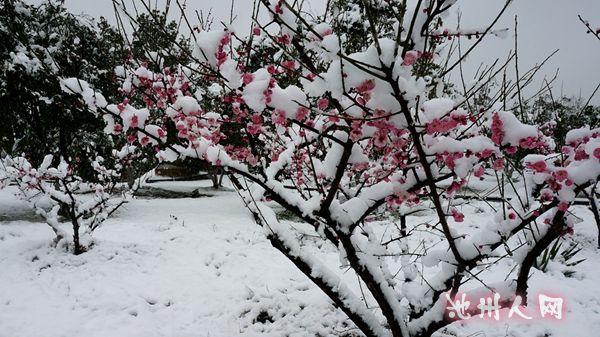微信头像雪景惜梅
