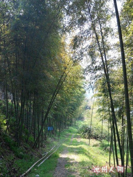 美丽池州山水 竹林 小径 花海