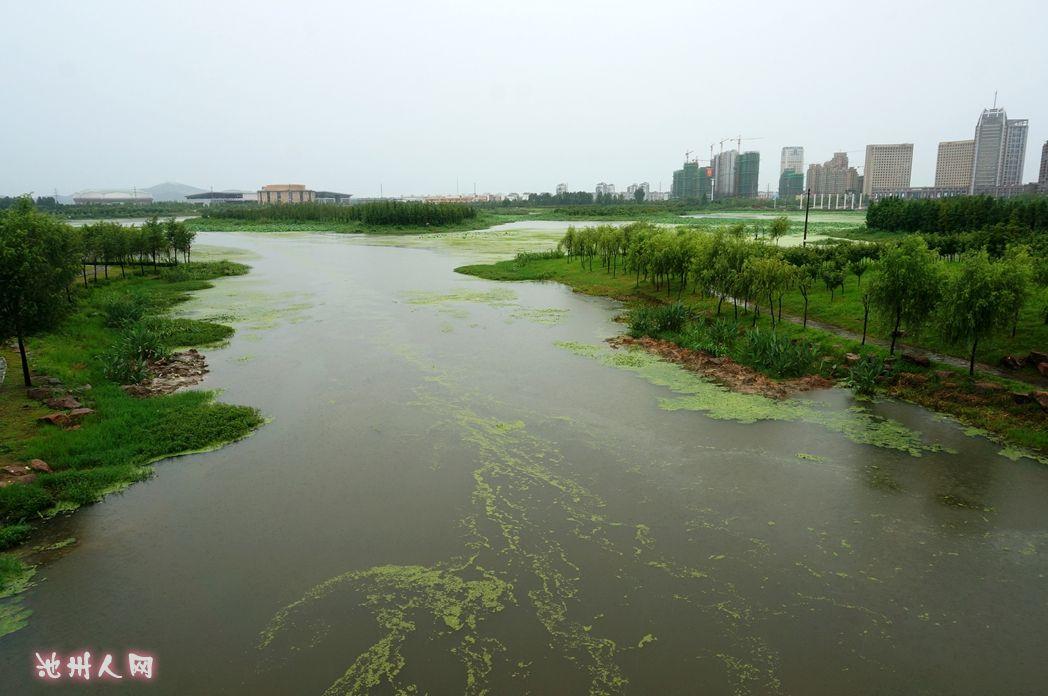 【山水池州】湿地公园的风景与天鹅