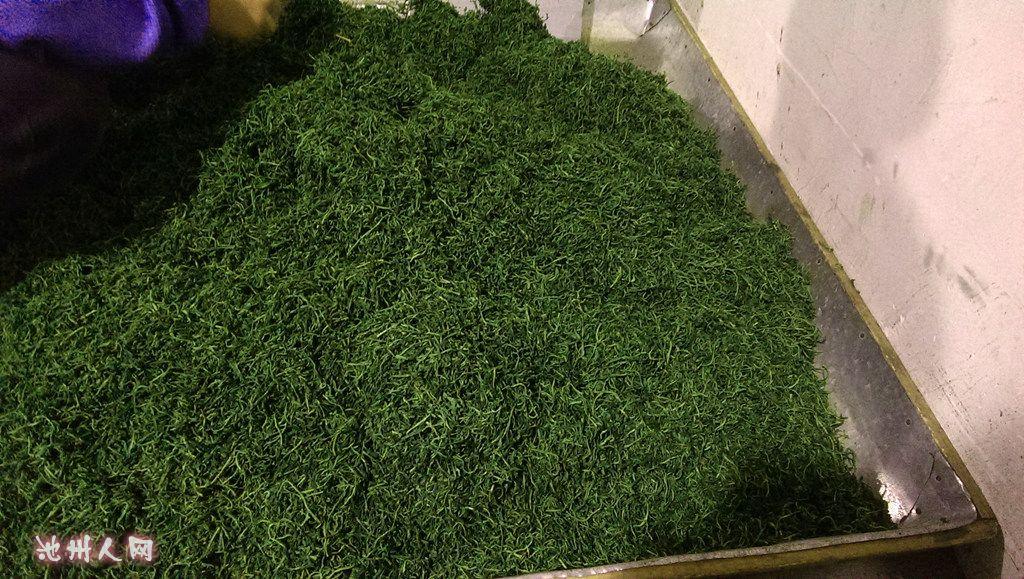 霄坑茶叶的制作全过程(用图片解说)