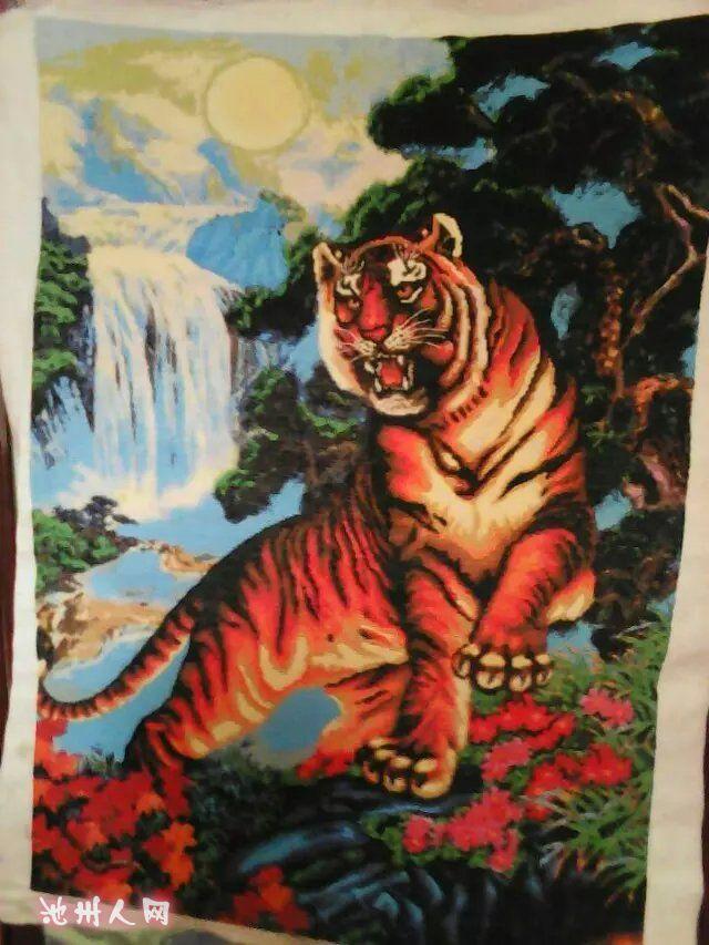 这个大老虎谁要? - 七嘴八舌
