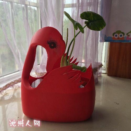 废物利用:洗衣液瓶子巧做花盆