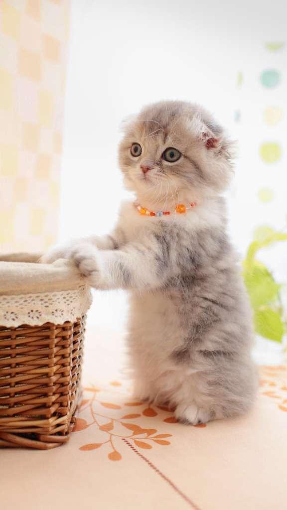 壁纸 动物 猫 猫咪 小猫 桌面 576_1024 竖版 竖屏 手机