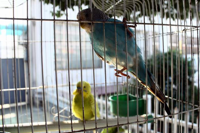 笼中的小鸟 ChizhouRen.com