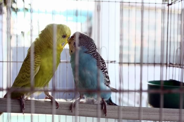 笼中的小鸟