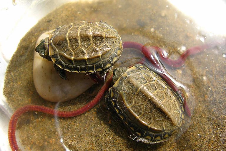 活着,太好了 养小乌龟的朋友秀下她们的成长相片吧高清图片